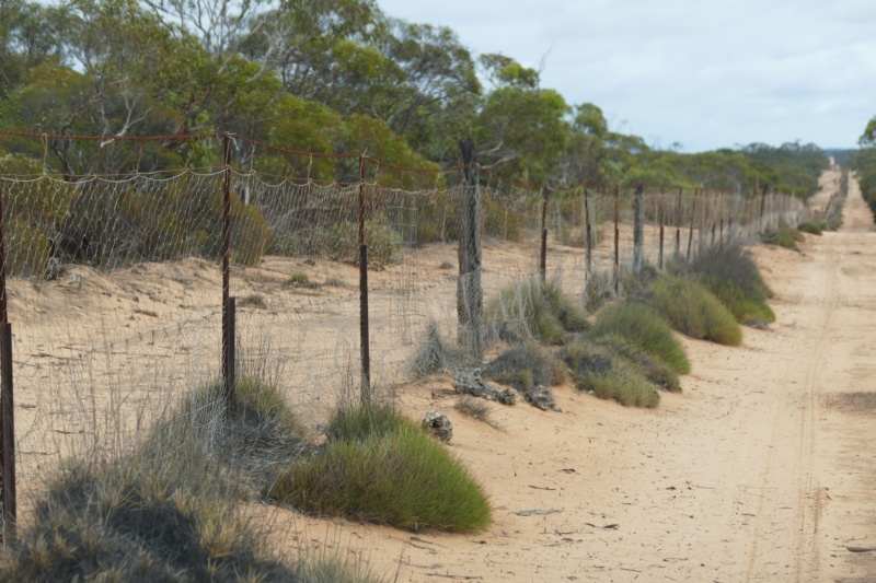 Fence in South Australia